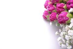 nejlikasamlingsram Royaltyfri Fotografi
