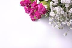 nejlikasamlingsram Royaltyfria Bilder