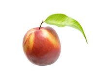 nektarin Fotografering för Bildbyråer