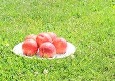 nektariner Royaltyfri Foto