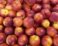 nektaryny Obraz Stock