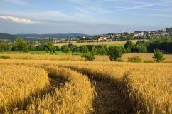 Nel campo di cereale Fotografia Stock Libera da Diritti