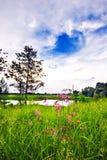 Nel campo di estate Fotografie Stock
