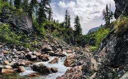 Nel canyon di un fiume della montagna Immagini Stock