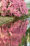 Nel colore rosa Immagine Stock Libera da Diritti