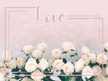 Nel concetto di amore, ami esprimere sul fondo delle rose bianche fotografie stock libere da diritti