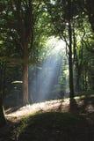 Nel Forrest II Immagini Stock