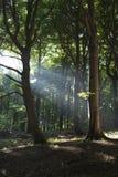 Nel Forrest III Fotografia Stock Libera da Diritti