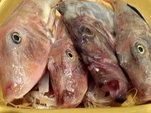 Nel fronte del pesce Fotografia Stock Libera da Diritti