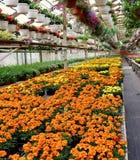 Nel Garden Center fotografia stock libera da diritti