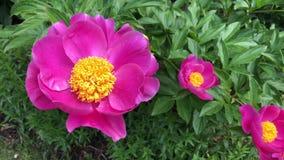 Nel giardino in primavera video d archivio