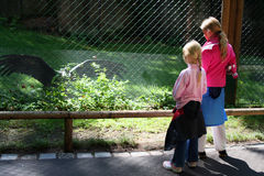 Nel giardino zoologico Fotografie Stock