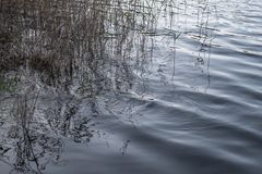 Nel lago fotografie stock libere da diritti
