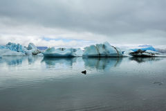 Nel lago glacier di Jokulsarlon, l'Islanda Fotografie Stock
