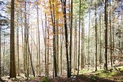Nel legno Fotografia Stock