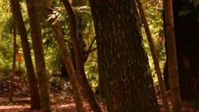 Nel legno a mezzogiorno con gli alberi e le foglie immagine stock