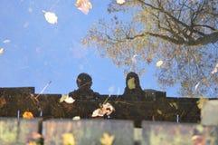 Nel legno, Noordoostpolder, Paesi Bassi fotografia stock libera da diritti