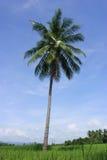 Nel mezzo degli alberi di noce di cocco. Fotografie Stock Libere da Diritti
