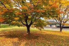 Nel parco del palazzo di Changgyeonggung Fotografia Stock Libera da Diritti