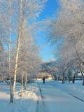 Nel parco di inverno fotografie stock libere da diritti