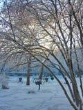 Nel parco di inverno Fotografia Stock