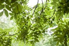 Nel parco - le foglie al sole Fotografia Stock