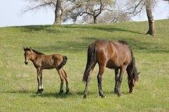Nel ranch del cavallo Fotografia Stock Libera da Diritti