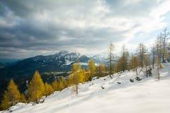 Nel selvaggio - parco nazionale Berchtesgaden fotografia stock libera da diritti