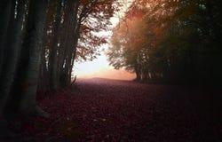 Nel Tappeto di Foglie bosco Stockbild