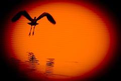 Nel tramonto Fotografia Stock Libera da Diritti
