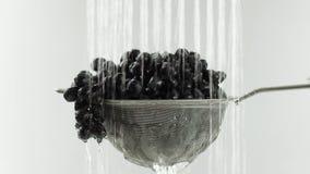 Nel video vediamo l'uva in un setaccio, caduta dell'acqua dalla cima all'estremità di video fermate dell'acqua, fondo bianco video d archivio