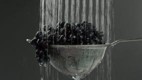 Nel video vediamo l'uva in un setaccio, la caduta dalla fermata di allora superiore, fondo grigio di inizio dell'acqua video d archivio