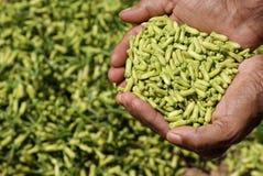 Nelken - eine des gesündesten Lebensmittels der Welt Stockfotos