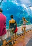 Nell'acquario di Barcellona Fotografia Stock