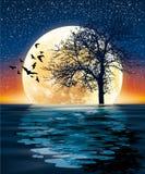 Luna enorme e un albero sull'acqua Immagine Stock