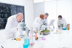 Nell'ambito di analisi del microscopio Immagini Stock