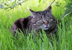 Nell'erba fotografia stock