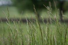 Nell'erba alta Fotografia Stock Libera da Diritti