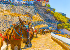 Nell'isola di Santorini in Grecia Immagini Stock