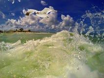 Nell'oceano innaffia il volo del gabbiano vicino Fotografie Stock