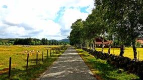 Nella campagna Rogaland Norvegia Fotografia Stock