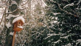 Nella casa di legno della foresta per gli uccelli nell'inverno HD 1920x1080 archivi video