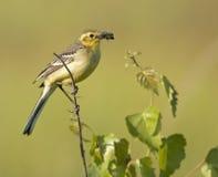 Nella cura degli uccelli di bambino Immagini Stock Libere da Diritti