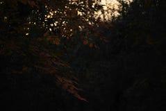 Nella foresta Immagine Stock Libera da Diritti