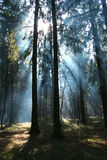 Nella foresta. Fotografia Stock