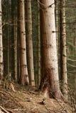 Nella foresta Immagini Stock