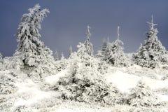 Nella foresta congelata Immagini Stock