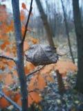 nella foresta di autunno Fotografie Stock