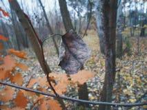 nella foresta di autunno Fotografie Stock Libere da Diritti