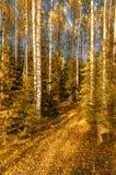 nella foresta di autunno Immagine Stock